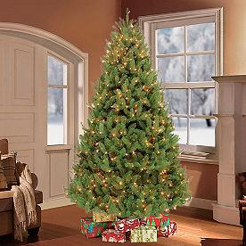 Pre-Lit Colorado Spruce Tree