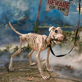 Shadow the Skeleton Dog on Leash