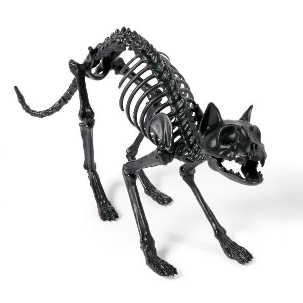 Black Skeleton Cat