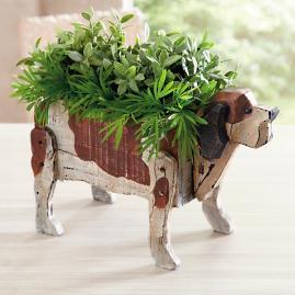 Bucky the Dog Box