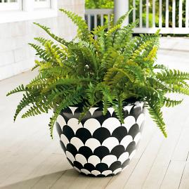 Boston Fern Urn Filler |