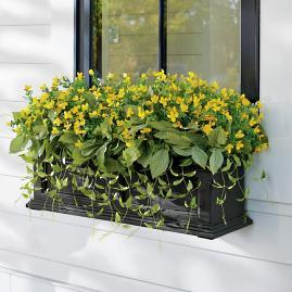Sunshine Blooms Window Box Filler