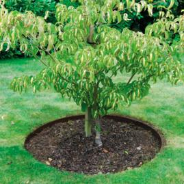 Everedge Tree Rings |