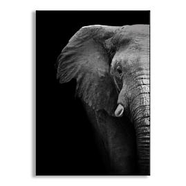 Elephant Close Up Metal Wall Art |