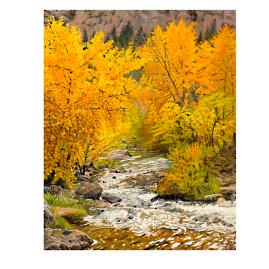 Fall on Baer Creek Wall Art