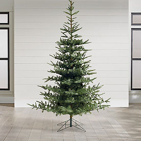 Un-lit Noblis Fir Christmas Tree