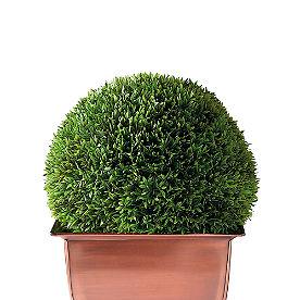 Faux Podocarpus Ball