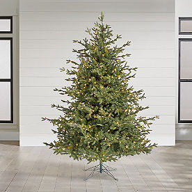 Aspen Pine Tree