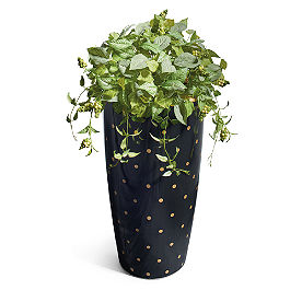 Andi Planter