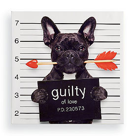 Guilty of Love Dog Wall Art