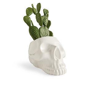 Skull Cactus Decor