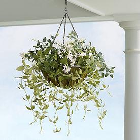 Pre-lit Blushing Jasmine Hanging Basket