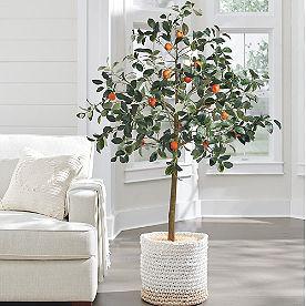 Tangerine Tree, 6'