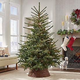 Farling Fraser Fir Tree