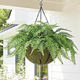 Classic Fern Hanging Basket