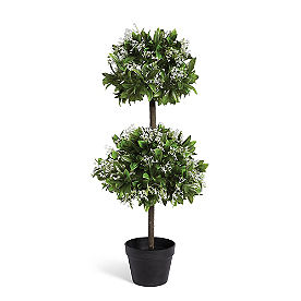 Waxleaf Privet Double Ball Topiary