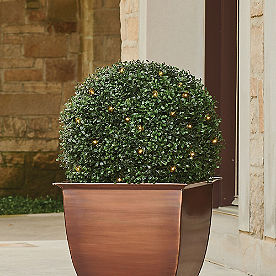 Pre-Lit Boxwood Ball Topiary