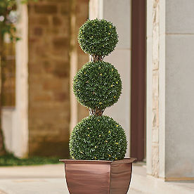 Pre-Lit Podocarpus Triple Ball Topiary
