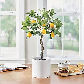 Potted Lemon Tabletop Tree