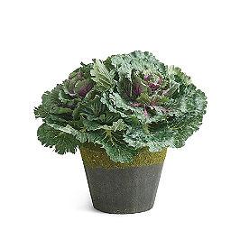 Ornamental Cabbage Urn Filler
