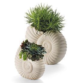 Nautilus Planter