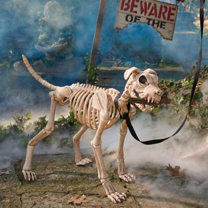 Shadow The Skeleton Dog On Leash Grandin Road