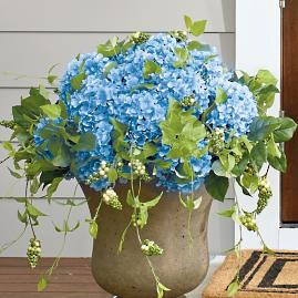 Haley Blue Hydrangea Urn Filler