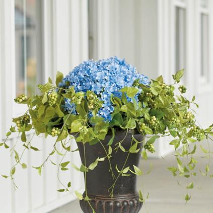 Haley Hydrangea Urn Filler Grandin Road