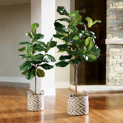 Fiddle Leaf Fig Tree Grandin Road
