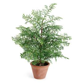 Soft Pine Tree in Pot