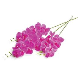 Magenta Orchid Stem, Set of Three
