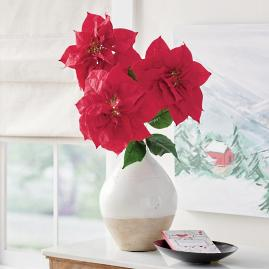 Red Poinsettia Stem, Set of Three