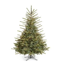 Farling Fraser Fir Tree