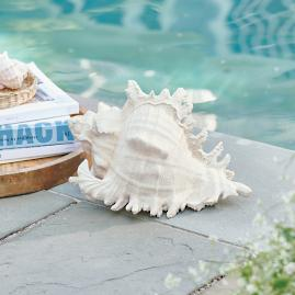 White Sands Conch Shell