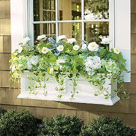 Devon Window Box