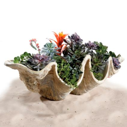 Giant Clam Shells Grandin Road